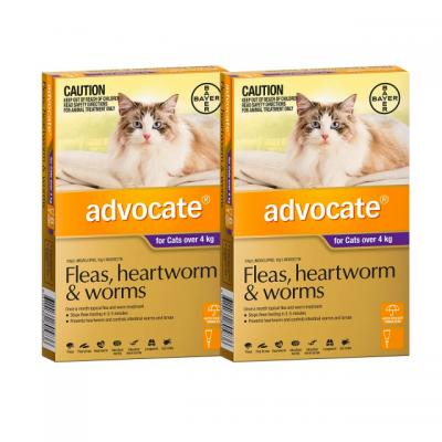 Advocate For Cats Large Over 4kg 12 pack