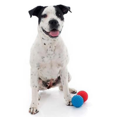 Aussie Dog Catch Ball Hard Red Tough Toy For Dogs