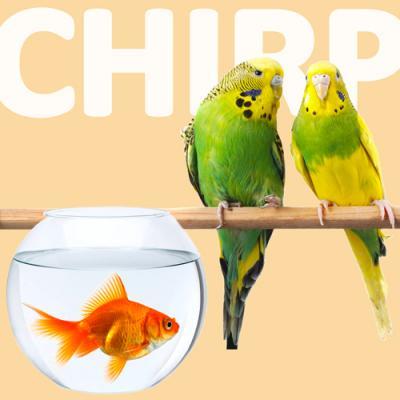 Fish & Bird Specials