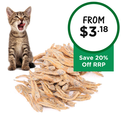 Budget Pet Products Discount Dog Products Pets Pet Shops