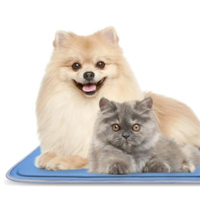 Squirt Cool Mat Bed Midi For Dogs And Cats 60cm X 90cm