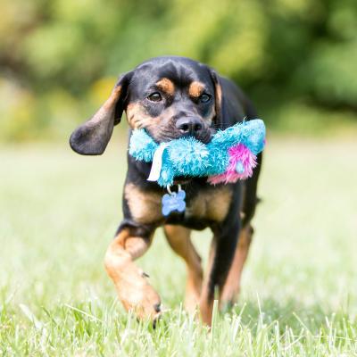 KONG Cozie King Lion Plush Squeak Medium Toy For Dogs