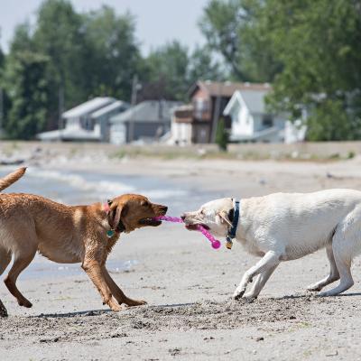 KONG Safestix Medium Toy For Dogs