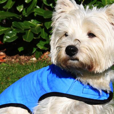 Cool Dog Cooling Coat Jacket Blue Large For Dogs