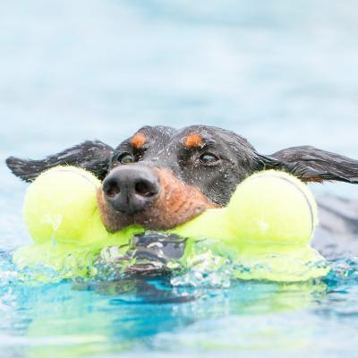 KONG AirDog Squeaker Bone Nonabrasive Felt Large Toy For Dogs