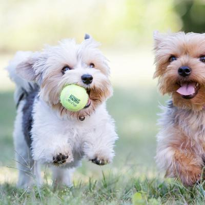 KONG AirDog SqueakAir Squeaker Balls Nonabrasive Felt Medium Toy For Dogs 3 Pack