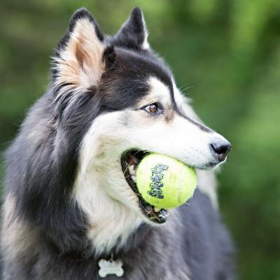 KONG AirDog SqueakAir Squeaker Balls Nonabrasive Felt Small Toy For Dogs 3 Pack