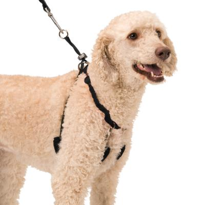 Sporn Training Halter Black For Large Dogs