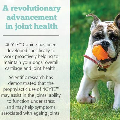 4CYTE Canine Joint Support For Dogs 2 x 100gm