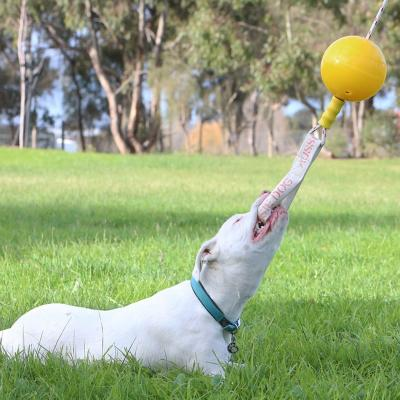 Aussie Dog Home Alone Junior Small Tough Bungee Toy For Dogs