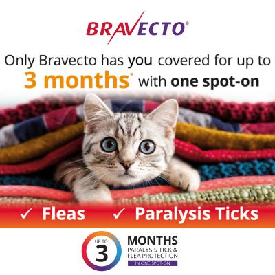 Bravecto Spot On For Cats Blue 2.8-6.25kg 4 Pack
