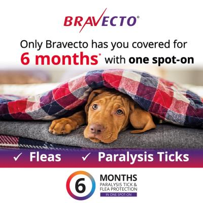 Bravecto Spot On For Dogs Blue 20-40kg 2 Pack