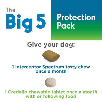 The Big 5 Protection Pack For Dogs Yellow 4kg-5.5kg 3 Pack (Interceptor + Credelio)