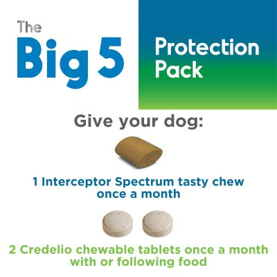 The Big 5 Protection Pack For Dogs Purple 22kg-45kg 6 Pack (Interceptor + Credelio)