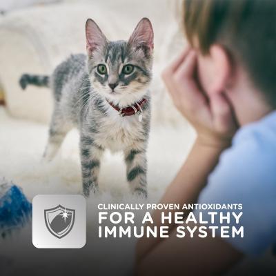 Hills Science Diet Tender Chicken Dinner Kitten Pouches Wet Cat Food 85gm x 48