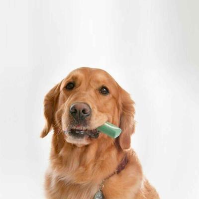 OraVet Dental Chews Medium Dogs 11-23kg 28 Days Treatment