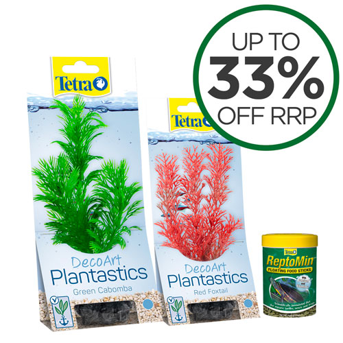 Tetra Plants And Food