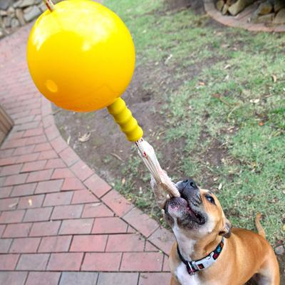 Aussie Dog Home Alone Large Tough Bungee Toy For Dogs