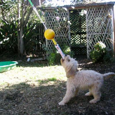 Aussie Dog Home Alone Mini Tough Bungee Toy For Dogs