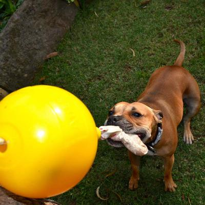 Aussie Dog Home Alone XLarge Tough Bungee Toy For Dogs