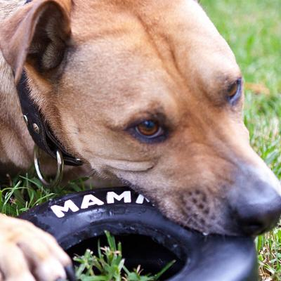 Mammoth TireBiter Paw Tread Rubber Tyre Toy For Small Dogs