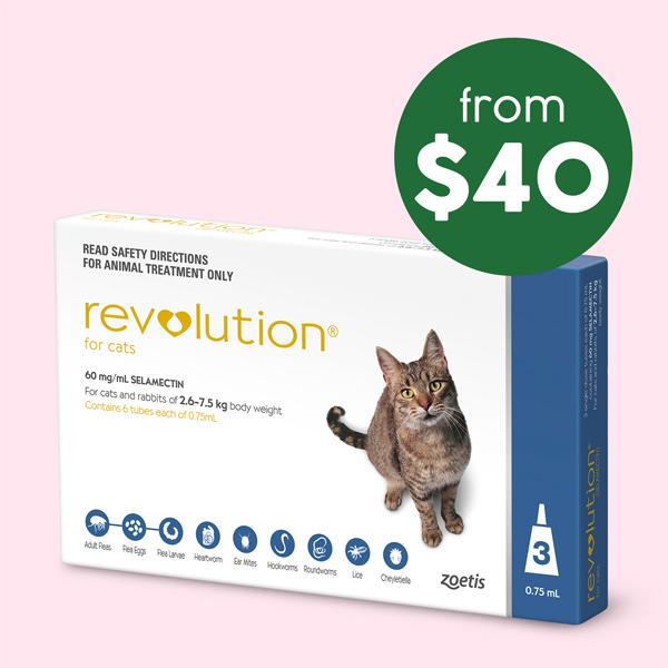 Revolution Cat