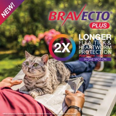 Bravecto Plus Spot On For Medium Cats 2.8 - 6.25kg 3 Pack