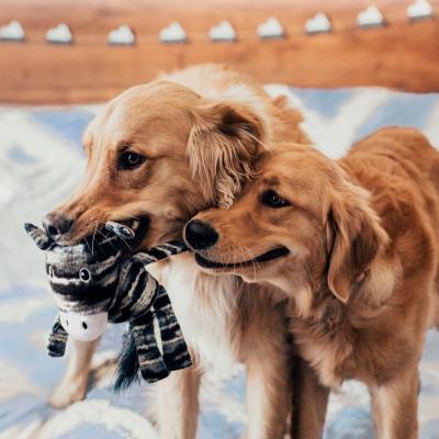 KONG Yarnimals Dog Plush Squeak Medium Large Toy For Dogs