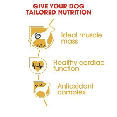 Royal Canin Boxer Adult Dry Dog Food 12kg