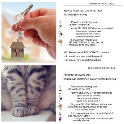 Complete Scratch Training Solution Feliscratch By Feliway With Kazoo Medium Scratching Post Solution For Kittens And Cats