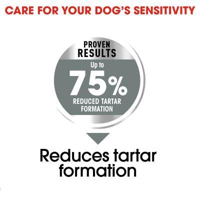 Royal Canin Dental Care Maxi Adult Dry Dog Food 18kg