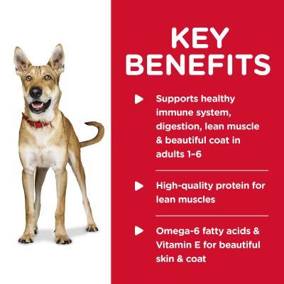 Hills Science Diet Chicken Barley Adult Dry Dog Food 12kg With Chicken Barley Adult Wet Cans 370g x 12