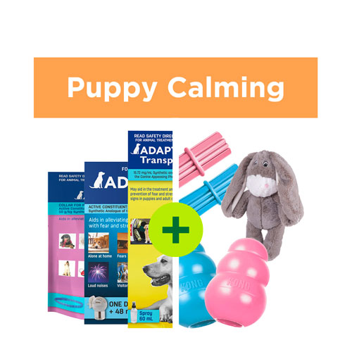 Puppy Calming Solutions