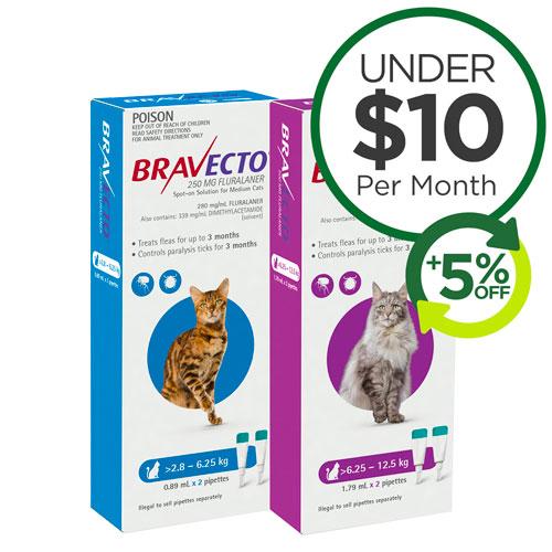 Bravecto Spot On Cat