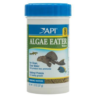 API Algae Eater Wafers Food For Fish 37gm