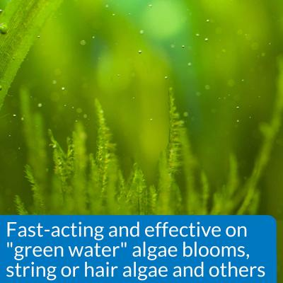 API Algaefix For Fish Aquarium 118ml